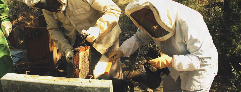 Auténtica miel de España